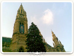 Christmas tree in front of the Vienna City Hall